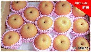 美味しい梨 「新興」(しんこう) 小玉 14個セット