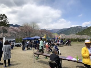 徳山の桜まつり開催