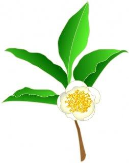 新茶商品の変更のお知らせ