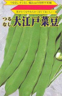 つるなしインゲンの種【大江戸菜豆】〔固定種〕