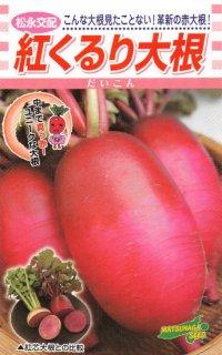 赤ダイコンの種【紅くるり】〔F1〕