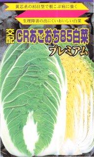 ハクサイの種【冬越白菜】〔F1〕 ※無消毒