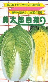 ハクサイの種【黄太郎】〔F1〕 ※無消毒
