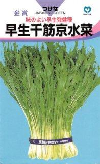 ミズナの種【早生千筋京水菜】〔固定種〕