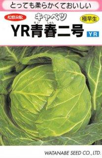 キャベツ【YR青春二号】〔F1〕 ※無消毒