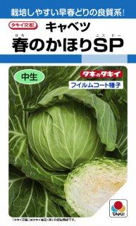キャベツ【春のかほりSP】〔F1〕 ※無消毒