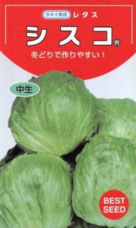 玉レタスの種【シスコ】〔固定種〕 ※無消毒