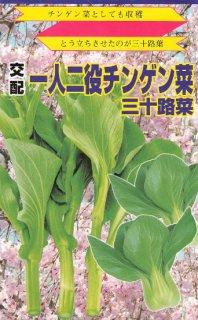 チンゲン菜花【三十路菜】 ※無消毒