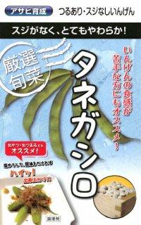 サヤインゲンの種【タネガシロ】〔固定種〕 ※無消毒
