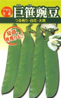 サヤエンドウの種【巨笹】〔固定種〕 ※無消毒