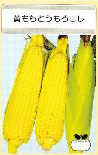 トウモロコシの種【黄もちトウモロコシ】〔固定種〕 ※無消毒