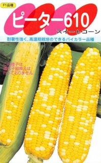 トウモロコシの種【ハニーバンタム ピーター610】〔F1〕