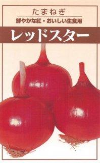 赤タマネギの種【レッドスター】〔固定種〕 ※無消毒