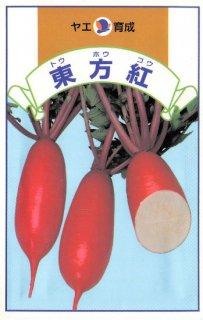 ダイコンの種【東方紅】〔固定種〕