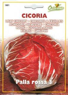 チコリーの種【ロッサ3】〔固定種〕 ※無消毒