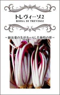チコリーの種【トレヴィーゾ2】〔固定種〕 ※無消毒