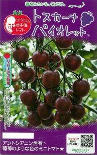 ミニトマトの種【トスカーナ・バイオレット】〔F1〕 ※無消毒