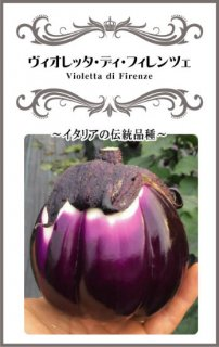 イタリアナスの種【ヴィオレッタ・ディ・フィレンツェ(Violetta di Firenze)】〔固定種〕 ※無消毒