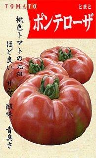 トマト(赤)【ポンテローザ】〔固定種〕 ※無消毒