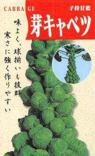芽キャベツ(子持甘藍)〔固定種〕 ※無消毒
