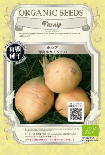 金カブの種〔有機種子・固定種〕※無消毒