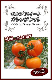 中玉トマトの種【セレブスイートオレンジトマト】〔F1〕 ※無消毒