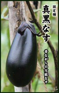 ナスの種【真黒茄子】〔固定種〕 ※無消毒