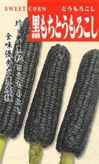 トウモロコシの種【黒もちトウモロコシ】〔固定種〕 ※無消毒