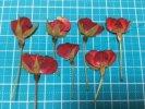 【押し花】バラ 横向き