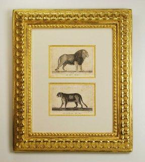 ビュフォン博物図版画 「ライオン・ジャガー」(GB-01)