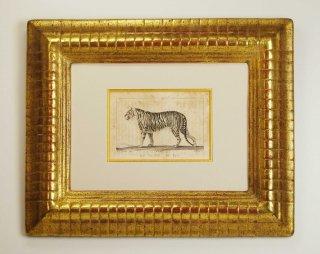 ビュフォン博物図版画 「タイガー」(GB-02)