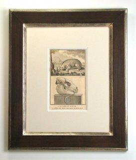 ビュフォン博物図版画 「ベンガルスローロリス」(GB-05)