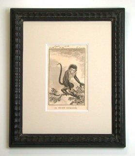 ビュフォン博物図版画 「サル」(GB-08)