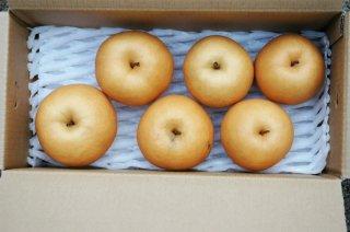 新高梨 ご家庭用(4〜7個)4kg