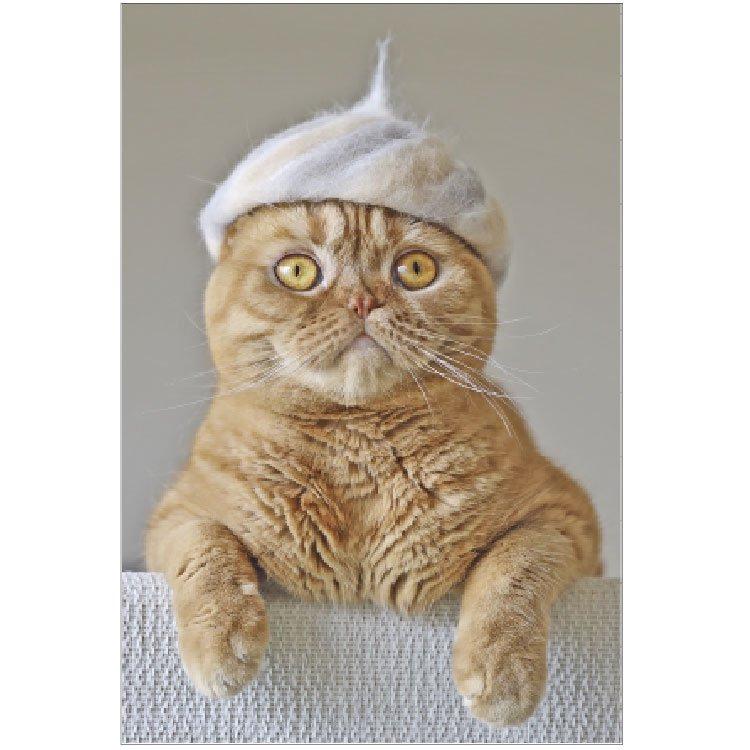 100% Cat hair ポストカード PB-478