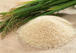 広島県 コシヒカリ(特別栽培米)玄米5kg
