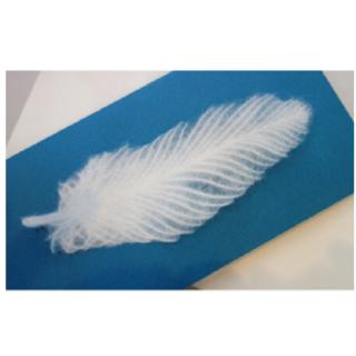 美濃和紙「カミノシゴト」 グリーティングカード Nature  羽