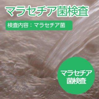 マラセチア菌の検査