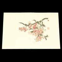遊膳 NW-04 抗菌尺三まっと日本の四季 桜 100枚入