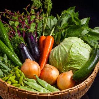 [産地直送] 下野の採れたて野菜セット(10種詰め合わせ)