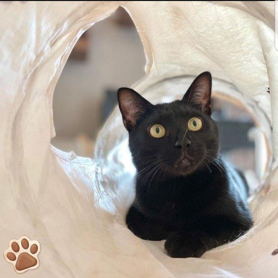 キャットトンネル 木目柄