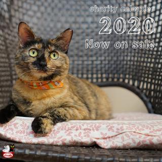 【Cコース】送料無料!猫の館ME チャリティカレンダー2020×10部