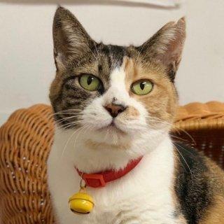 【チャリティー】ふくねこ 猫さんのやわらか首輪