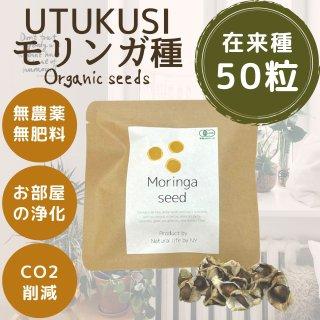 モリンガの種子10g