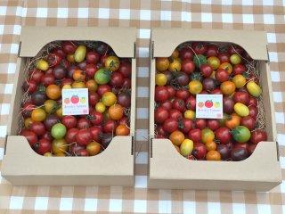 2箱 同一梱包でとってもお徳 ジュエリートマト(1箱1,5キロ約130粒〜180粒程度)×2箱