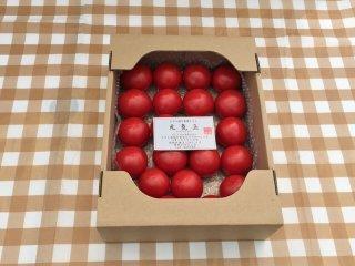 皆さま、お待たせ致しました期間限定 元気玉フルーツトマト(1.2 キロ前後 10個〜20個)