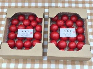 6月下旬で栽培終了 2箱同一梱包 送料がとってもお得 期間限定 元気玉フルーツトマト(3.0キロ前後 20個〜40個)