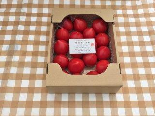 お待たせしました今期販売スタート 初恋フルーツトマト(1箱約1.2キロ前後10〜25個)期間限定 2月から6月