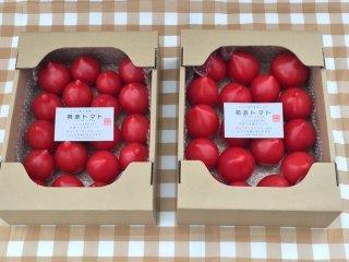 同一梱包で送料がとってもお得 期間限定(6月下旬まで) 初恋フルーツトマト2箱(2箱約2.5キロ前後20〜50個)