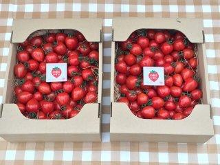 期間限定(6月下旬で栽培終了)同一梱包で送料がとってもお得 いちごトマト2箱(1箱1.5キロ 約120粒〜180粒)×2箱